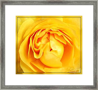 Yellow Petals Framed Print by Cathie Tyler
