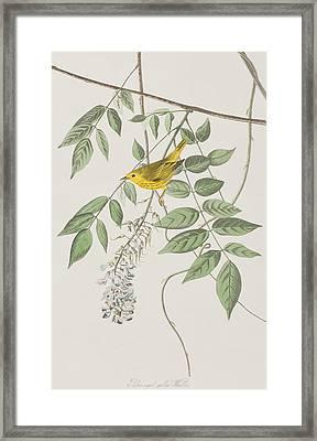 Yellow Poll Warbler Framed Print by John James Audubon