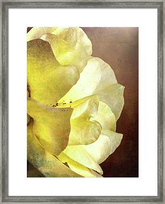 Yellow Rose Framed Print by Bob Orsillo
