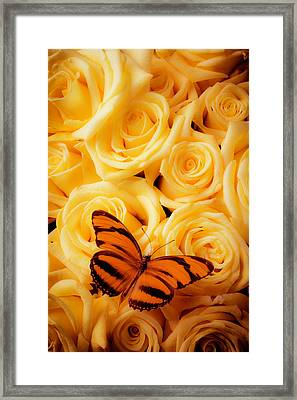 Yellow Roses And Butterfly Framed Print by Garry Gay