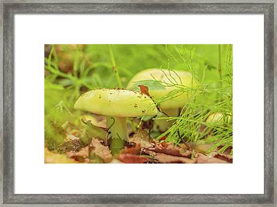 Yellow Toadstool Framed Print by Edie Ann Mendenhall