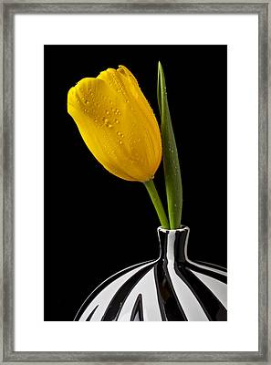 Yellow Tulip In Striped Vase Framed Print by Garry Gay
