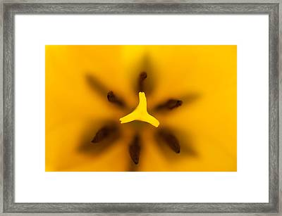 Yellow Tulip Framed Print by Sebastian Musial