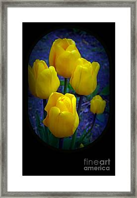Yellow Tulips Framed Print by Kay Novy