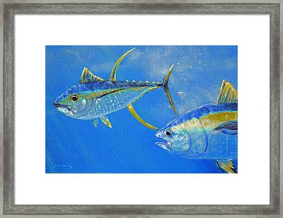 Yellowfin Tuna Crop Framed Print by Ken Figurski