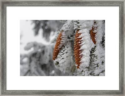 Yep, It's Winter Framed Print by Andreas Levi