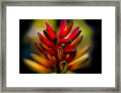Yet To Flower Framed Print by Az Jackson