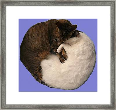 Yin And Yang Framed Print by Valerie Ornstein