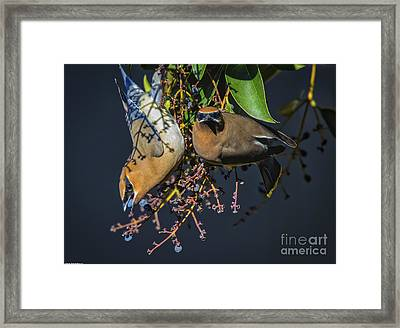 Ying Yang Framed Print by Mitch Shindelbower