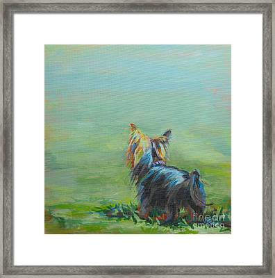 Yorkie In The Grass Framed Print by Kimberly Santini