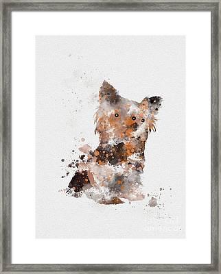 Yorkshire Terrier Framed Print by Rebecca Jenkins