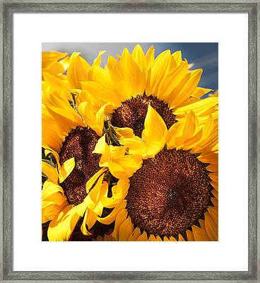 You Are My Sunshine Framed Print by Karen Wiles