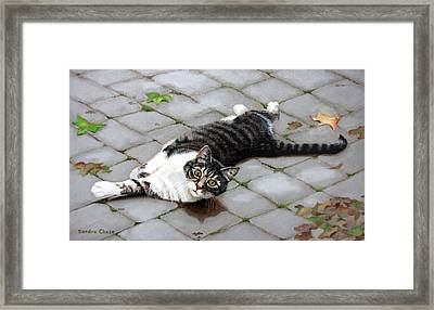 You Called? Framed Print by Sandra Chase