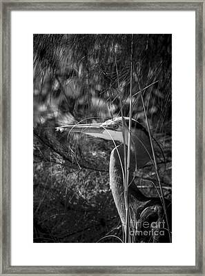 You Can't See Me-bw Framed Print by Marvin Spates