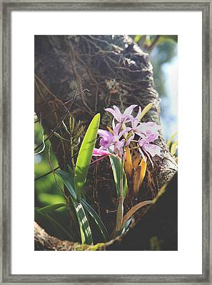 You Held Me Ever So Gently Framed Print by Laurie Search