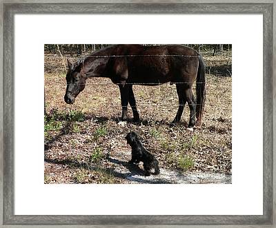 You Lookin At Me Framed Print by Al Powell Photography USA