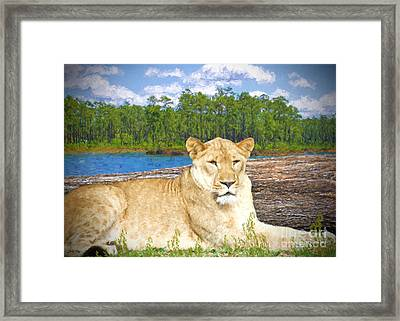 Young And  Beautiful Framed Print by Judy Kay