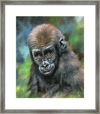 Young Gorilla Framed Print by David Stribbling