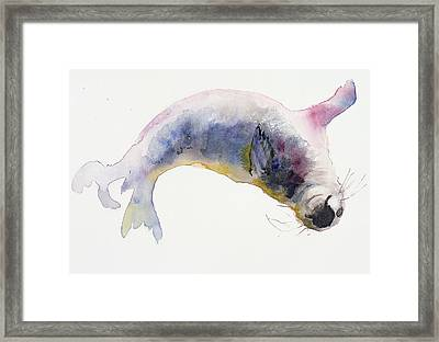 Young Grey Seal Framed Print by Mark Adlington