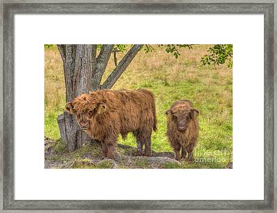 Young Highland Framed Print by Veikko Suikkanen