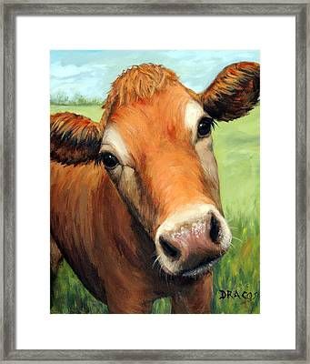 Young Jersey Cow In Field Framed Print by Dottie Dracos