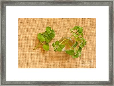 Young Mexican Mint Seedlings Framed Print by Arletta Cwalina