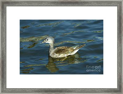 Young Of Mandarin Duck Framed Print by Michal Boubin