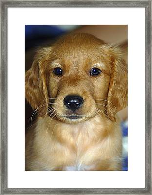 Young Sam Framed Print by Stephen Anderson