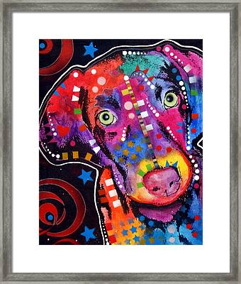 Young Weimaraner Framed Print by Dean Russo