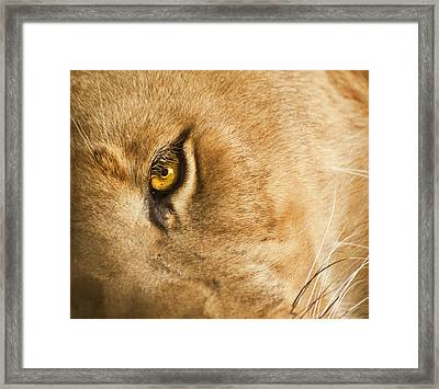 Your Lion Eye Framed Print by Carolyn Marshall