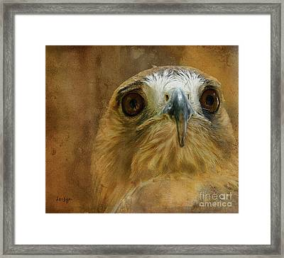 Your Majesty Framed Print by Lois Bryan