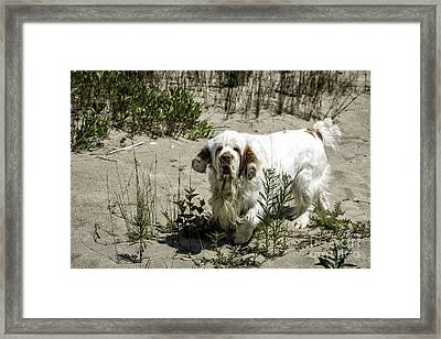 You're On My Beach Framed Print by Timothy Hacker