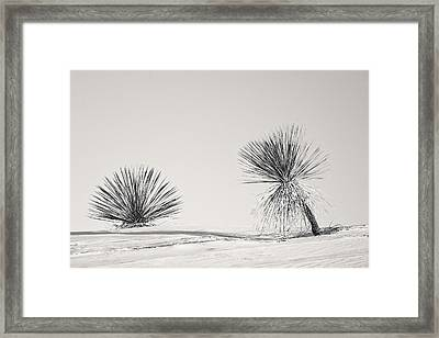 yucca in White sands Framed Print by Ralf Kaiser