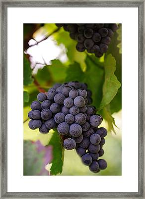 Yummy Berries Framed Print by Jenny Rainbow