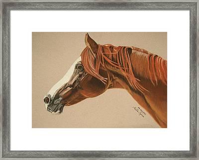 Zarro Framed Print by Melita Safran