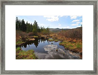 Zealand River  Framed Print by Catherine Reusch Daley