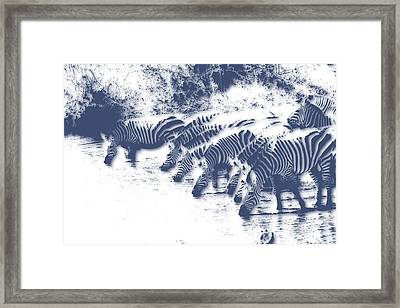 Zebra 3 Framed Print by Joe Hamilton