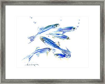 Zebra Fish, Danio Framed Print by Suren Nersisyan