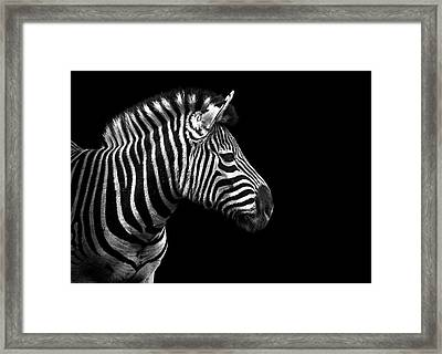 Zebra In Black And White Framed Print by Malcolm MacGregor