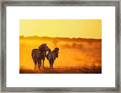 Zebra In The Light Framed Print by Ben Mcrae