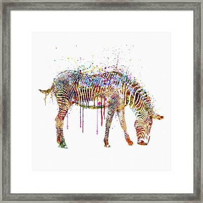 Zebra Watercolor Painting Framed Print by Marian Voicu