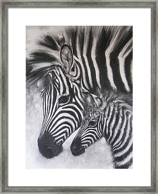 Zebras, Mother And Baby #2 Framed Print by Adrienne Martino