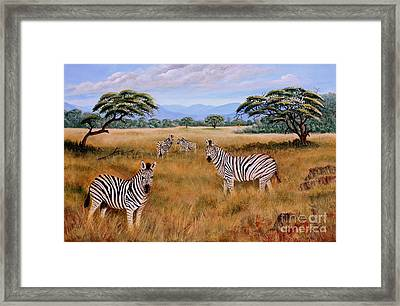 Zebras On The Bushveld Framed Print by Ursula Reeb