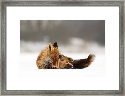 Zen Fox Series - Comfortably Fox Framed Print by Roeselien Raimond