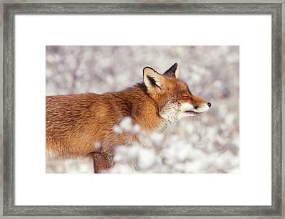 Zen Fox Series - Happy Fox IIn The Snow Framed Print by Roeselien Raimond