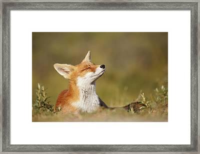Zen Fox Series - Summer Fox Framed Print by Roeselien Raimond
