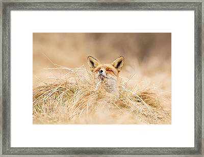 Zen Fox Series - Zen Fox 2.7 Framed Print by Roeselien Raimond