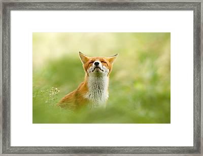 Zen Fox Series - Zen Fox Does It Agian Framed Print by Roeselien Raimond