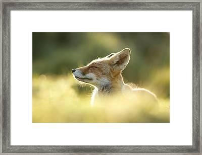 Zen Fox Series - Zen Fox Up Close Framed Print by Roeselien Raimond