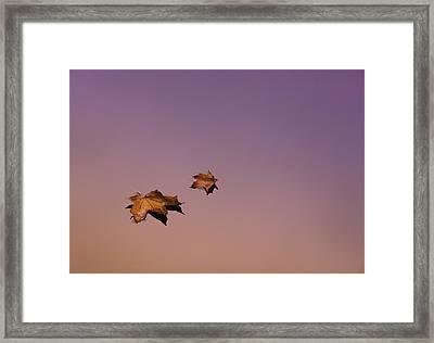 Zen Leaves Framed Print by Thomas Schoeller